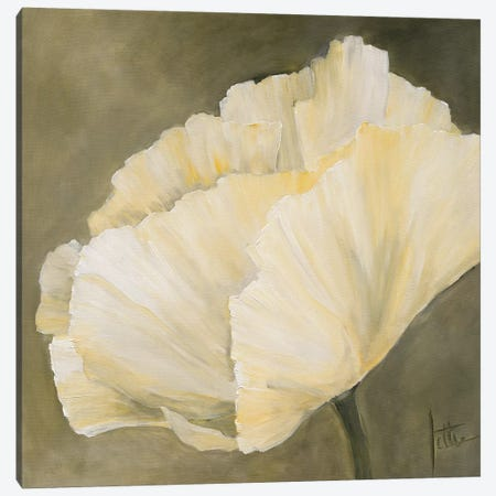 Poppy In White III Canvas Print #JET20} by Jettie Roseboom Canvas Artwork