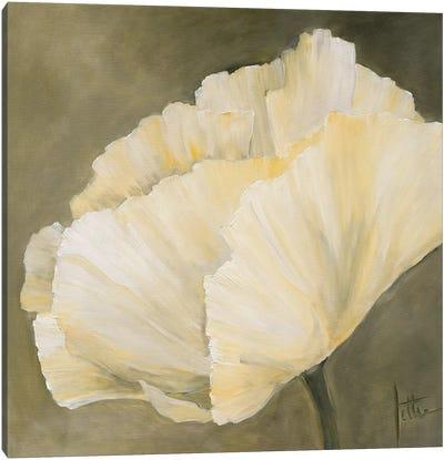 Poppy In White III Canvas Art Print