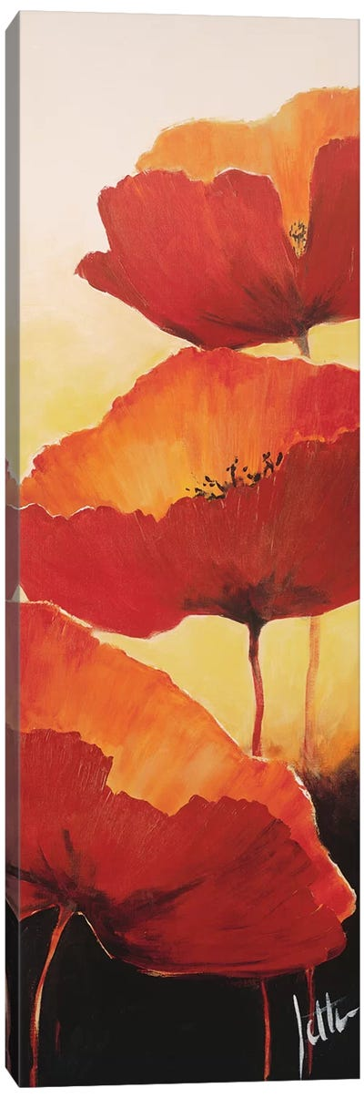 Three Red Poppies II Canvas Art Print