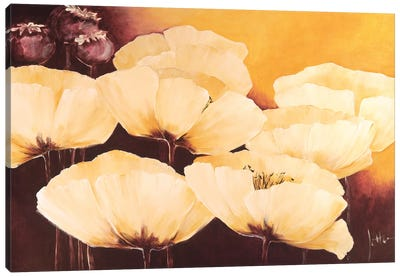 Yellow Poppies I Canvas Art Print