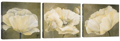 Poppy In White Triptych Canvas Art Print
