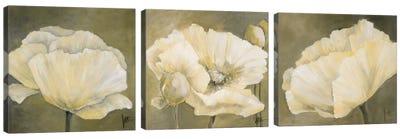 Poppy In White Triptych Canvas Art Print