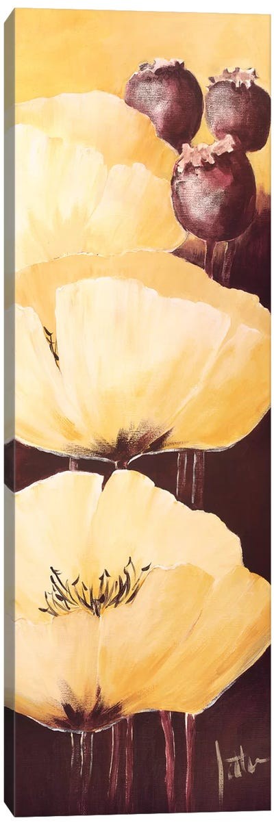 Yellow Poppies IV Canvas Art Print