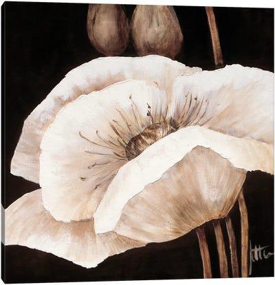 Amazing Poppies I Canvas Art Print