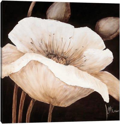 Amazing Poppies II Canvas Art Print