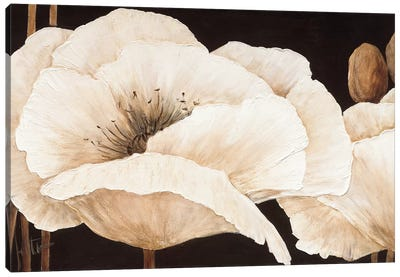 Amazing Poppies III Canvas Art Print