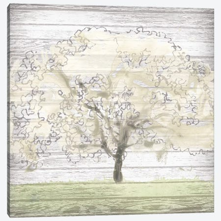 Barn Tree II Canvas Print #JEV1002} by June Erica Vess Canvas Print