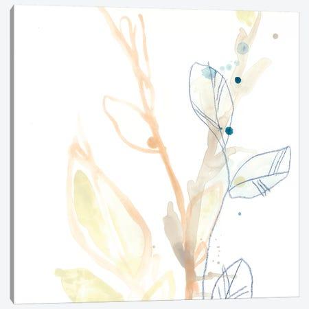 Botany Gesture VIII Canvas Print #JEV1202} by June Erica Vess Canvas Print