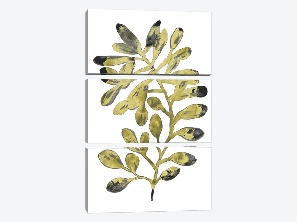 Foliage Fossil II by June Erica Vess 3-piece Canvas Wall Art