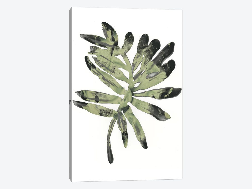 Foliage Fossil V by June Erica Vess 1-piece Canvas Art Print