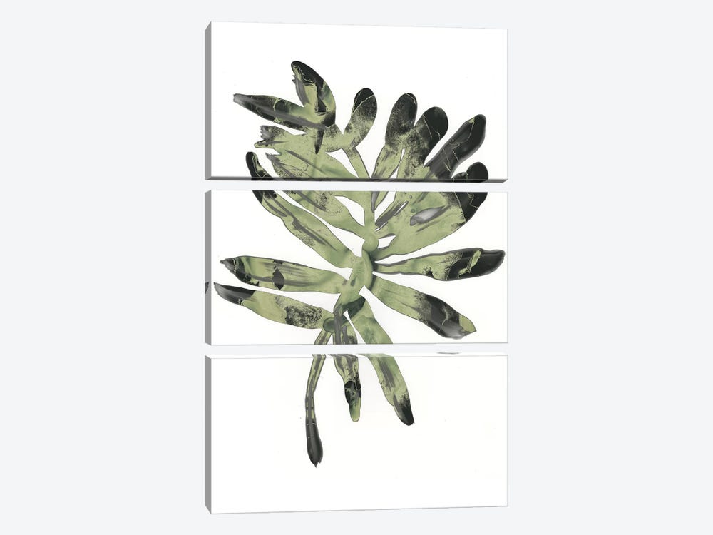 Foliage Fossil V by June Erica Vess 3-piece Art Print