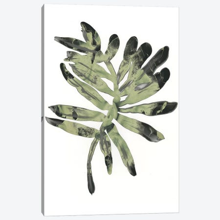 Foliage Fossil V 3-Piece Canvas #JEV1236} by June Erica Vess Art Print