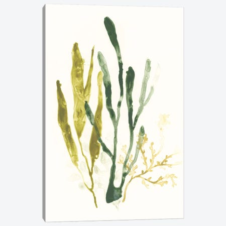 Kelp Collection I Canvas Print #JEV1280} by June Erica Vess Canvas Art Print