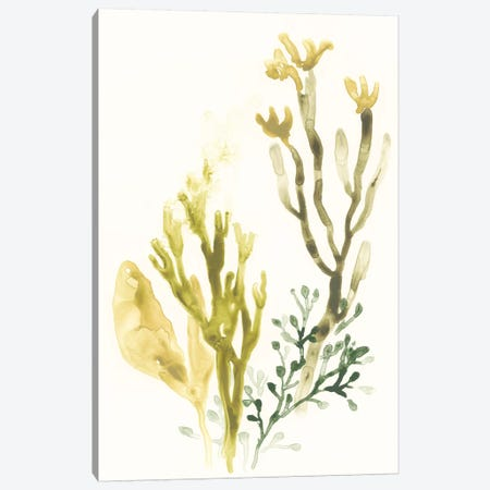 Kelp Collection II Canvas Print #JEV1281} by June Erica Vess Art Print