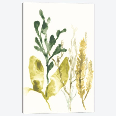 Kelp Collection III Canvas Print #JEV1282} by June Erica Vess Canvas Art Print