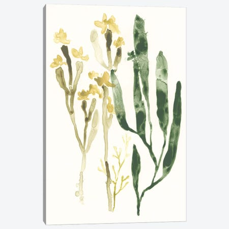 Kelp Collection IV Canvas Print #JEV1283} by June Erica Vess Canvas Print