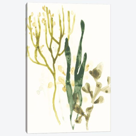 Kelp Collection V Canvas Print #JEV1284} by June Erica Vess Canvas Artwork