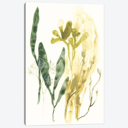 Kelp Collection VI Canvas Print #JEV1285} by June Erica Vess Canvas Artwork