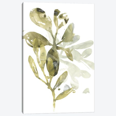 Lichen & Leaves I Canvas Print #JEV1286} by June Erica Vess Canvas Artwork