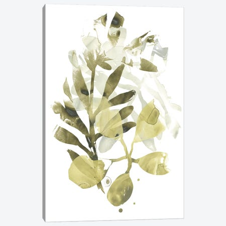 Lichen & Leaves II Canvas Print #JEV1287} by June Erica Vess Canvas Artwork