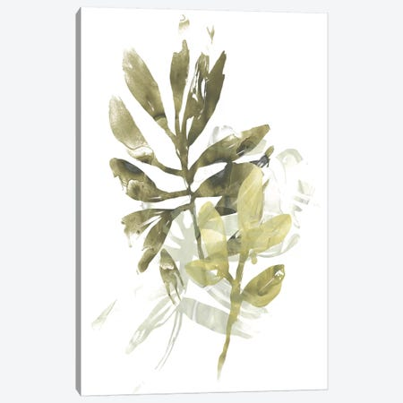 Lichen & Leaves III 3-Piece Canvas #JEV1288} by June Erica Vess Canvas Art Print