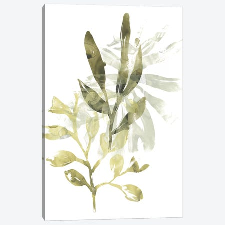 Lichen & Leaves IV Canvas Print #JEV1289} by June Erica Vess Art Print