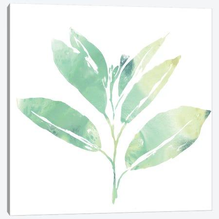 Prisma Tropical II Canvas Print #JEV1355} by June Erica Vess Canvas Artwork