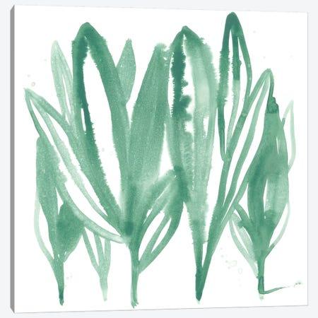 Boho Tropicals IV Canvas Print #JEV1481} by June Erica Vess Art Print