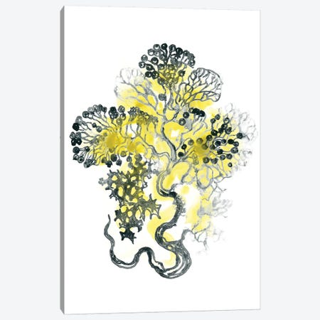 Citron Sea Kelp I Canvas Print #JEV1492} by June Erica Vess Canvas Art