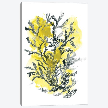 Citron Sea Kelp II Canvas Print #JEV1493} by June Erica Vess Canvas Artwork