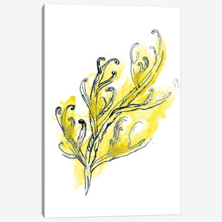 Citron Sea Kelp III Canvas Print #JEV1494} by June Erica Vess Canvas Print