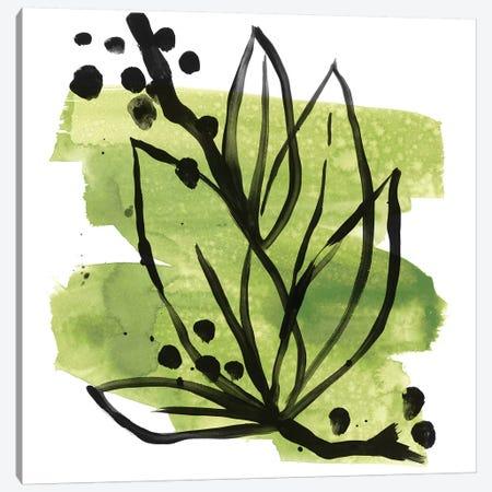 Tropical Sumi-e II Canvas Print #JEV1637} by June Erica Vess Canvas Print