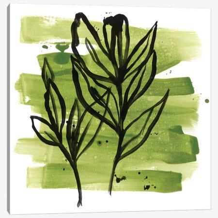 Tropical Sumi-e VI Canvas Print #JEV1642} by June Erica Vess Art Print