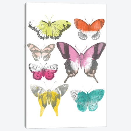 Chromatic Butterflies II Canvas Print #JEV1686} by June Erica Vess Canvas Wall Art