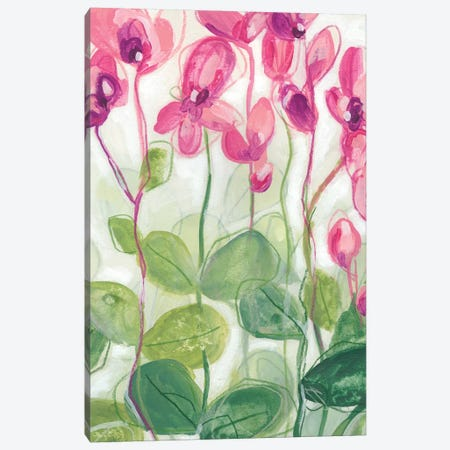Cyclamen Fantasia II Canvas Print #JEV1834} by June Erica Vess Canvas Print