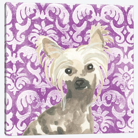 Parlor Pooches IX Canvas Print #JEV1897} by June Erica Vess Canvas Art Print