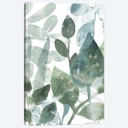 Aquatic Leaves I Canvas Print #JEV1929} by June Erica Vess Canvas Wall Art