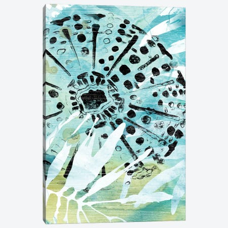 Echinoidia II Canvas Print #JEV1964} by June Erica Vess Art Print