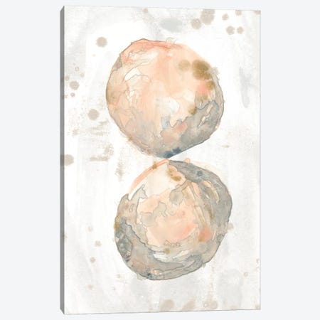 Muted Molusk II Canvas Print #JEV2033} by June Erica Vess Canvas Art