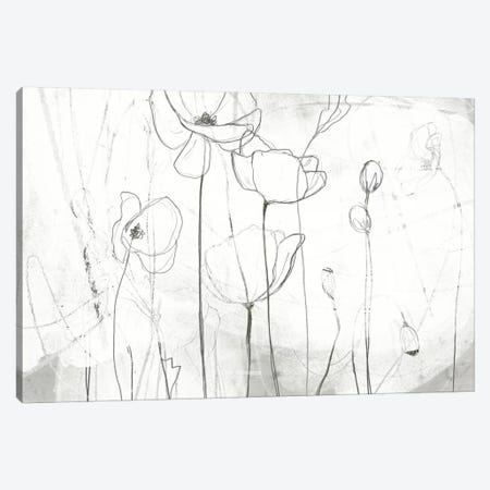 Poppy Sketches I Canvas Print #JEV203} by June Erica Vess Canvas Art