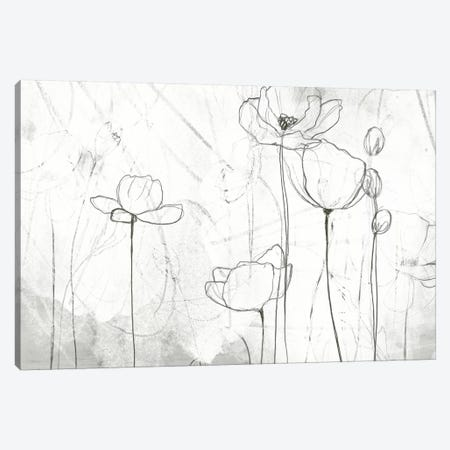 Poppy Sketches II Canvas Print #JEV204} by June Erica Vess Canvas Print