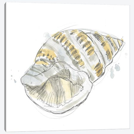 Citron Shell Sketch I Canvas Print #JEV2231} by June Erica Vess Canvas Art