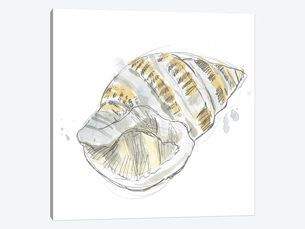 Citron Shell Sketch I by June Erica Vess 1-piece Canvas Wall Art