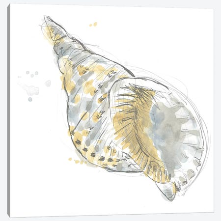 Citron Shell Sketch II Canvas Print #JEV2232} by June Erica Vess Canvas Artwork