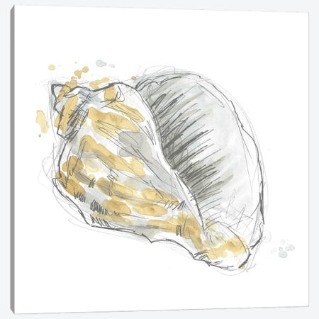 Citron Shell Sketch III Canvas Print #JEV2233} by June Erica Vess Canvas Wall Art