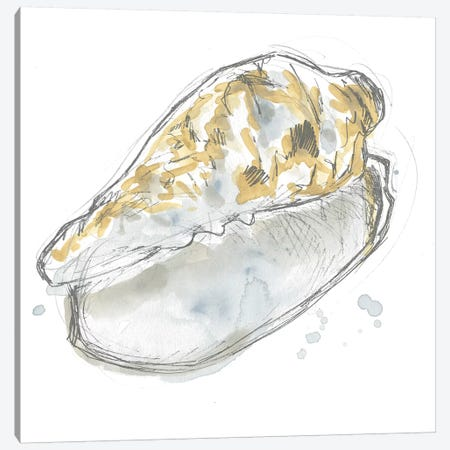 Citron Shell Sketch IV Canvas Print #JEV2234} by June Erica Vess Canvas Print