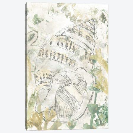 Verdant Shell Fresco III Canvas Print #JEV2316} by June Erica Vess Canvas Wall Art