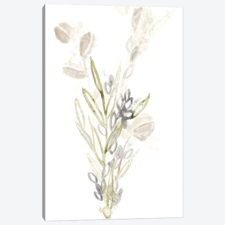 Botanica Whimsy II Canvas Print #JEV264} by June Erica Vess Canvas Print