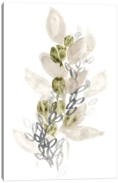Botanica Whimsy III Canvas Art Print