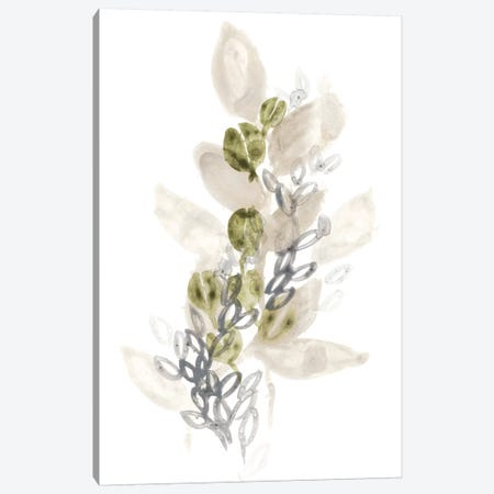 Botanica Whimsy III Canvas Print #JEV265} by June Erica Vess Art Print